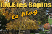 blog-sapin